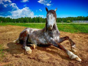 balade cheval